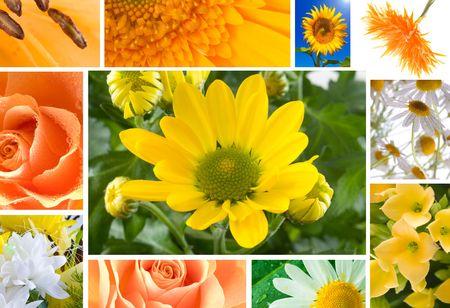 multi image Flowers in yellow tones Stock Photo - 3878795