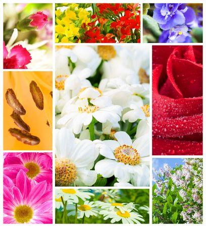 multi image Flowers Stock Photo - 3878922