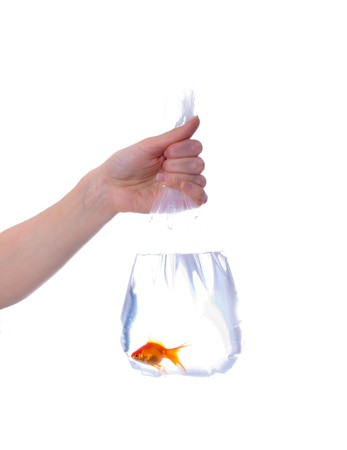 skintone: Package with goldfish in hands. Isolation Stock Photo
