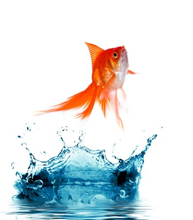 Goldfish is jumping out of  water Stock Photo - 4293785