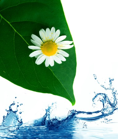Green leaves in fresh water. Stock Photo - 4432681