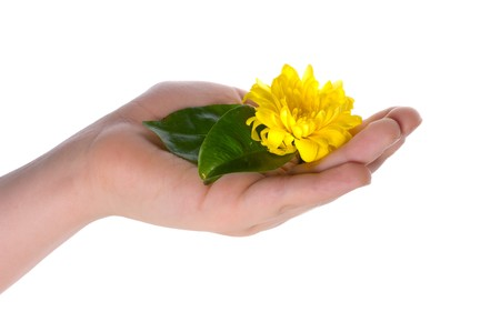 Hands and plant isolated on white background Stock Photo - 4459763
