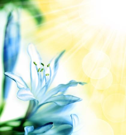 flower. macro/ depth of field Stock Photo - 4459782