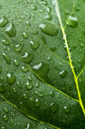 Green leaves in fresh water. Stock Photo - 4594519