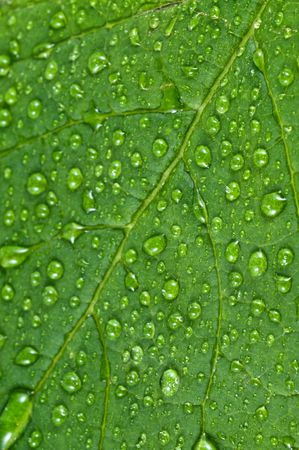 Green leaves in fresh water. Stock Photo - 4594540