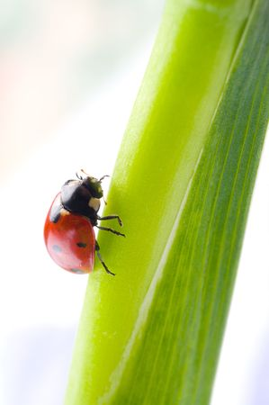 Ladybug sitting on a green leaf. photo