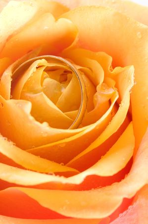 Wedding ring and rose/ macro Stock Photo - 4701107