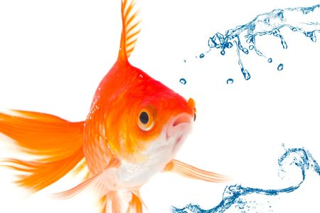 gold fish Stock Photo - 5159828