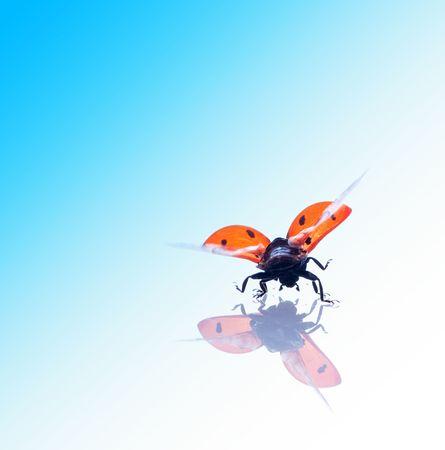red ladybug. on white isolated Stock Photo - 5159704