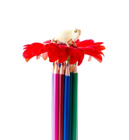 Color pencils and flower photo