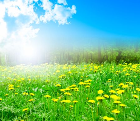 Field of dandelions on background of the sky Stock Photo - 5196323
