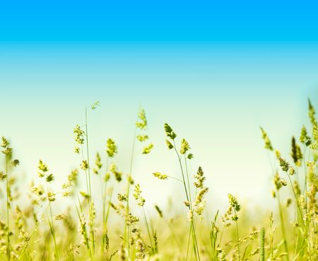 grass and perfect blue sky  photo