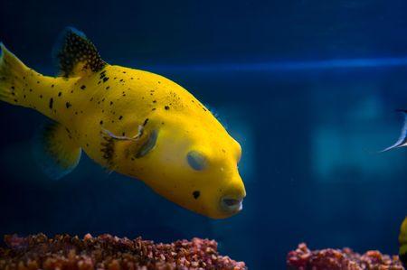 coral colony: Foto di una colonia di corallina