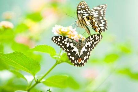 butterfly on leaf  photo