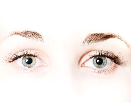 macro very beautiful female eye   photo