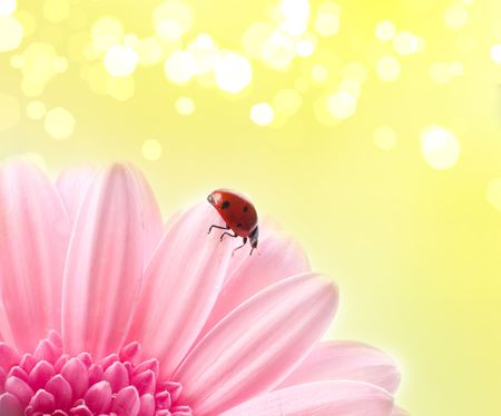 flower petal with lady bug photo