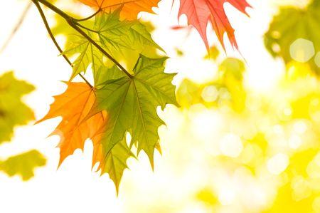Herbst geht, very shallow focus Standard-Bild