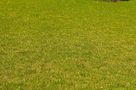 Grass on a golf field    photo