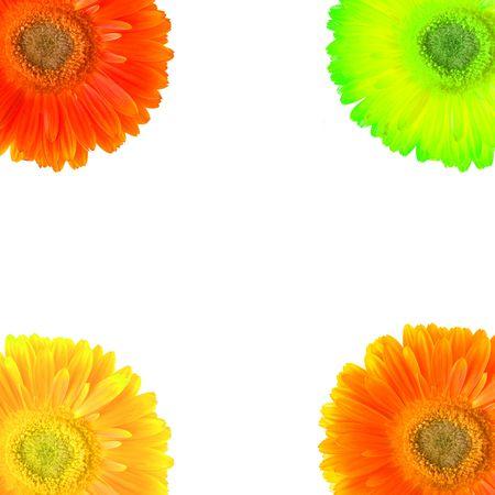 color Daisy flowers Stock Photo - 5628150