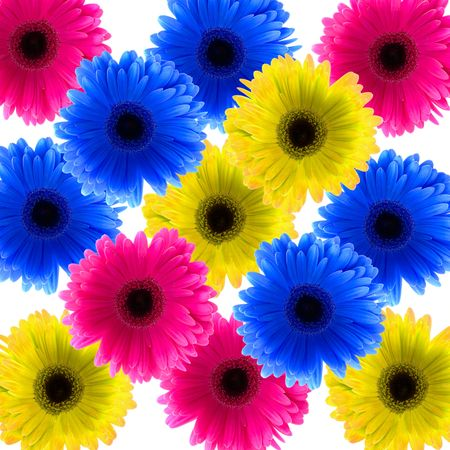 color Daisy flowers Stock Photo - 5628126