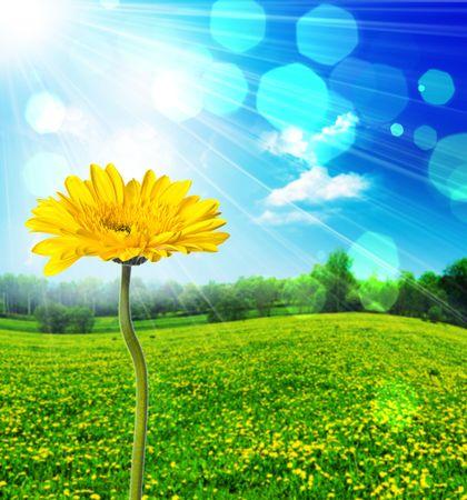 grüne Gras über einen blauen Himmel Standard-Bild