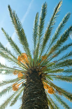 Palm brunch with sky  photo