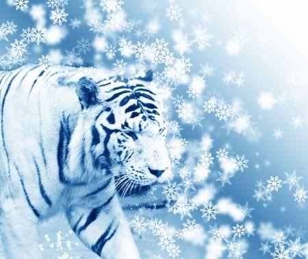 tiger on snow photo