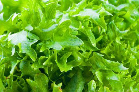 vibrat color: green fresh Lettuce Stock Photo