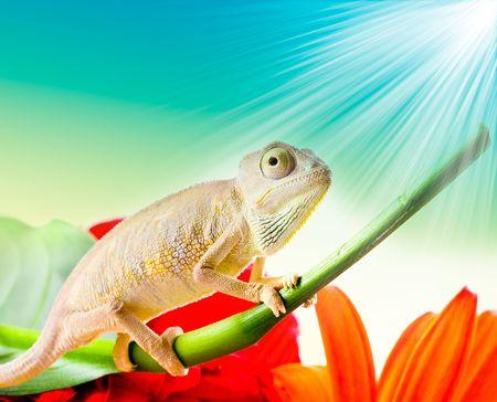 emotive: Chameleon on flower Stock Photo