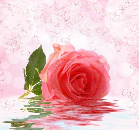 reflexion: Rosa rosa con la reflexi�n en el agua