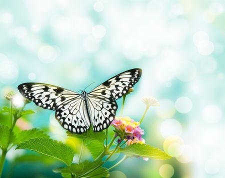 papillon rose: papillon de beaut� sur la feuille. petit DDL
