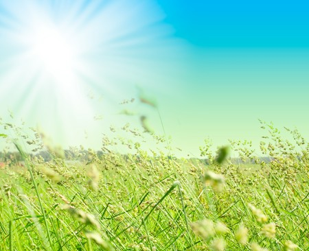 grass and perfect blue sky Stock Photo - 6989366