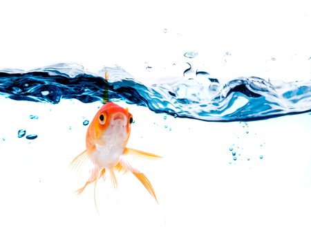 gold fish jumping over slash blue water photo