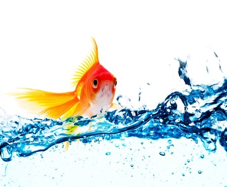gold fish jumping over slash blue water Stock Photo - 7610653