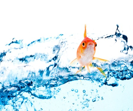 gold fish jumping over slash blue water Stock Photo - 7709473