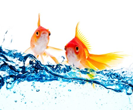 gold fish jumping over slash blue water Stock Photo - 7846394