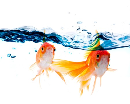 gold fish jumping over slash blue water Stock Photo - 7846730
