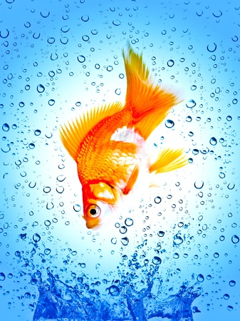 Goldfish is jumping out of water photo