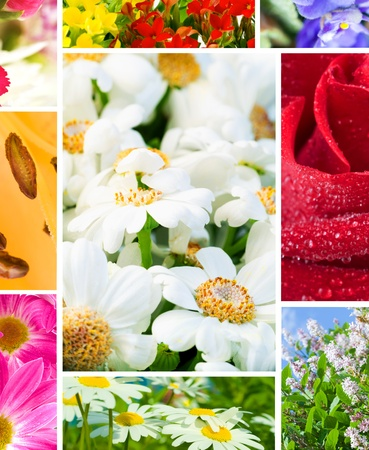multi image Flowers Stock Photo - 8431863