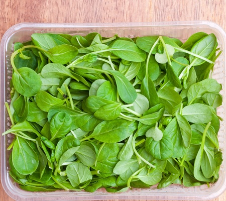 espinacas: Org�nica de mezcla de primavera verde de lechuga