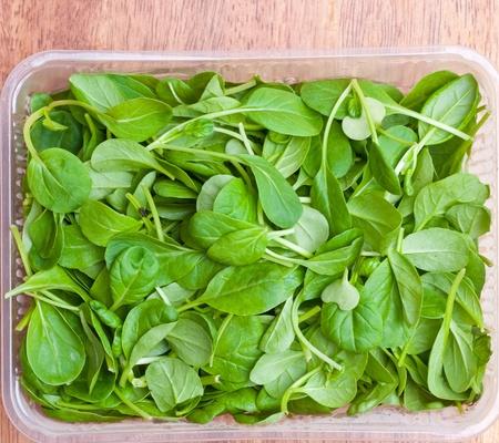 spinaci: Organic Spring Mix verde lattuga