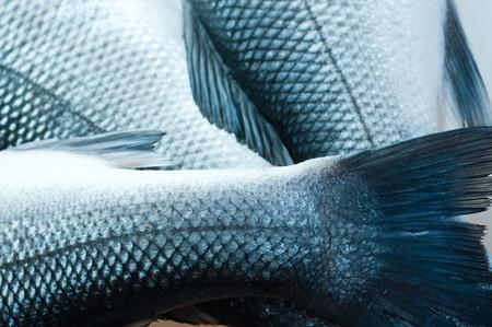 fish scales: pescado fresco de org�nico. en blanco Foto de archivo