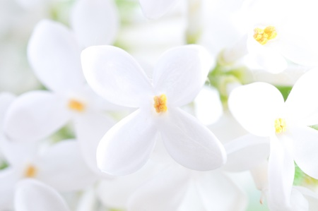 Close-up beautiful lilac flowers Stock Photo - 9058770