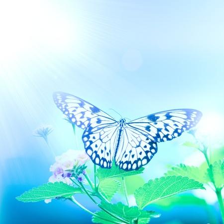 beauty butterfly on  leaf. small DOF photo