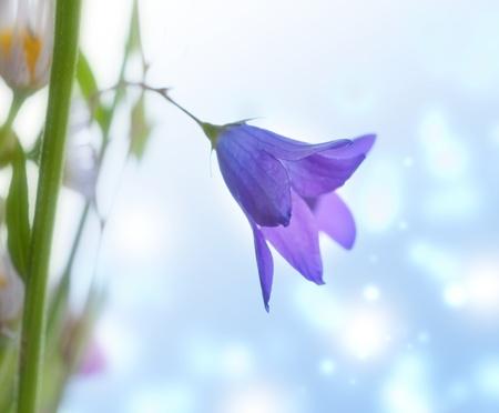 Little spring bell flowers photo