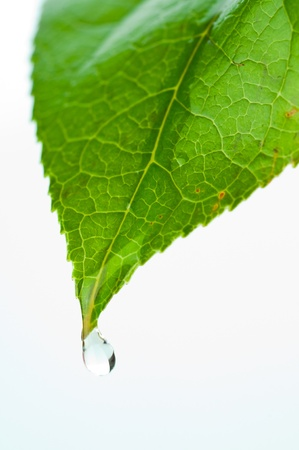 Green leaf with water droplets photo