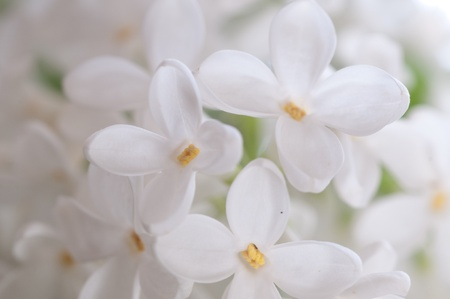 Close-up beautiful lilac flowers Stock Photo - 9376999