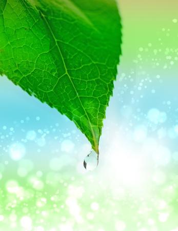 kropla deszczu: trawa z kropli wody z samego rana Zdjęcie Seryjne