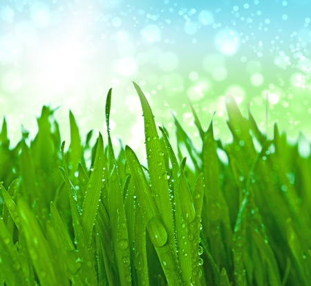 grass with water drops in the early morning Stock Photo - 9864021