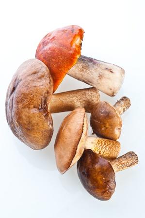 reticulatus: Summer Cep Mushrooms (Boletus reticulatus)